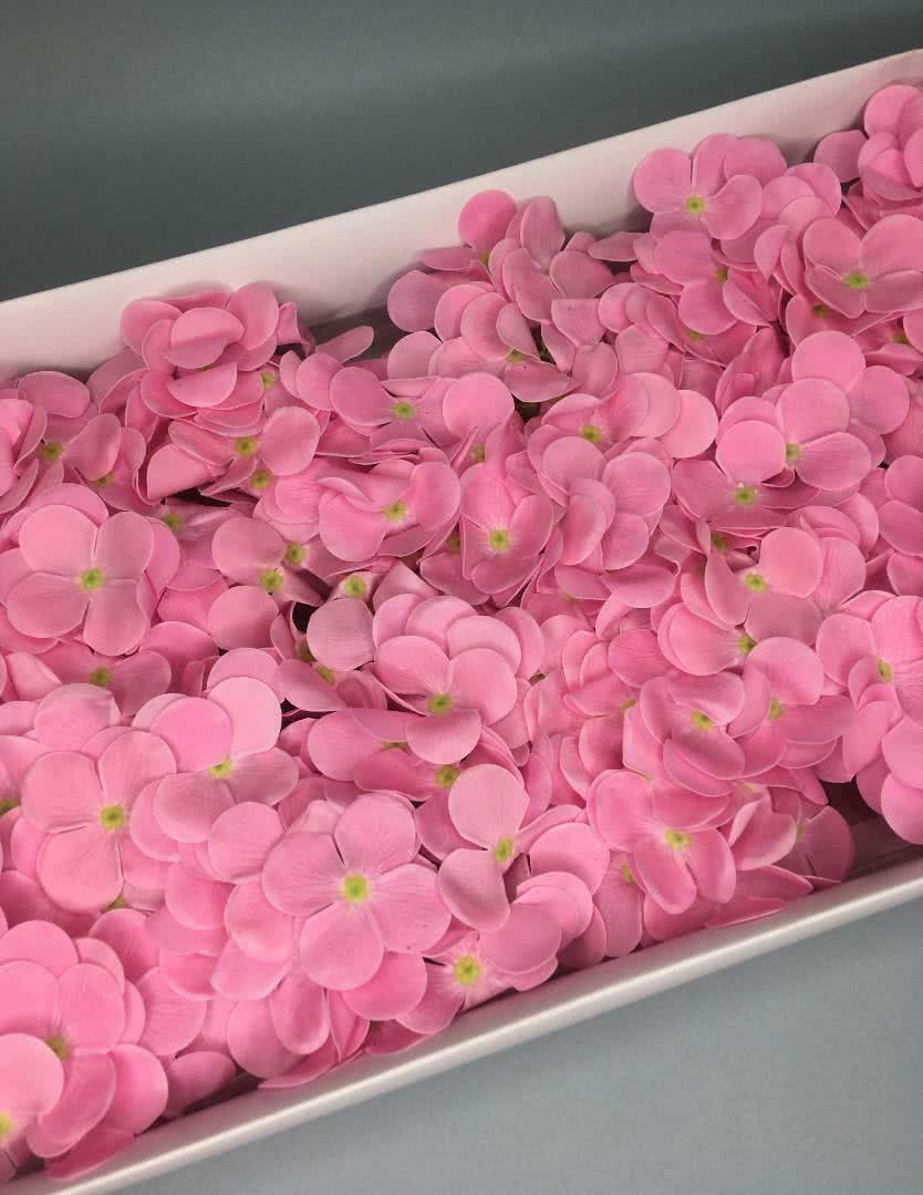 Гортензия — розовая 25 шт