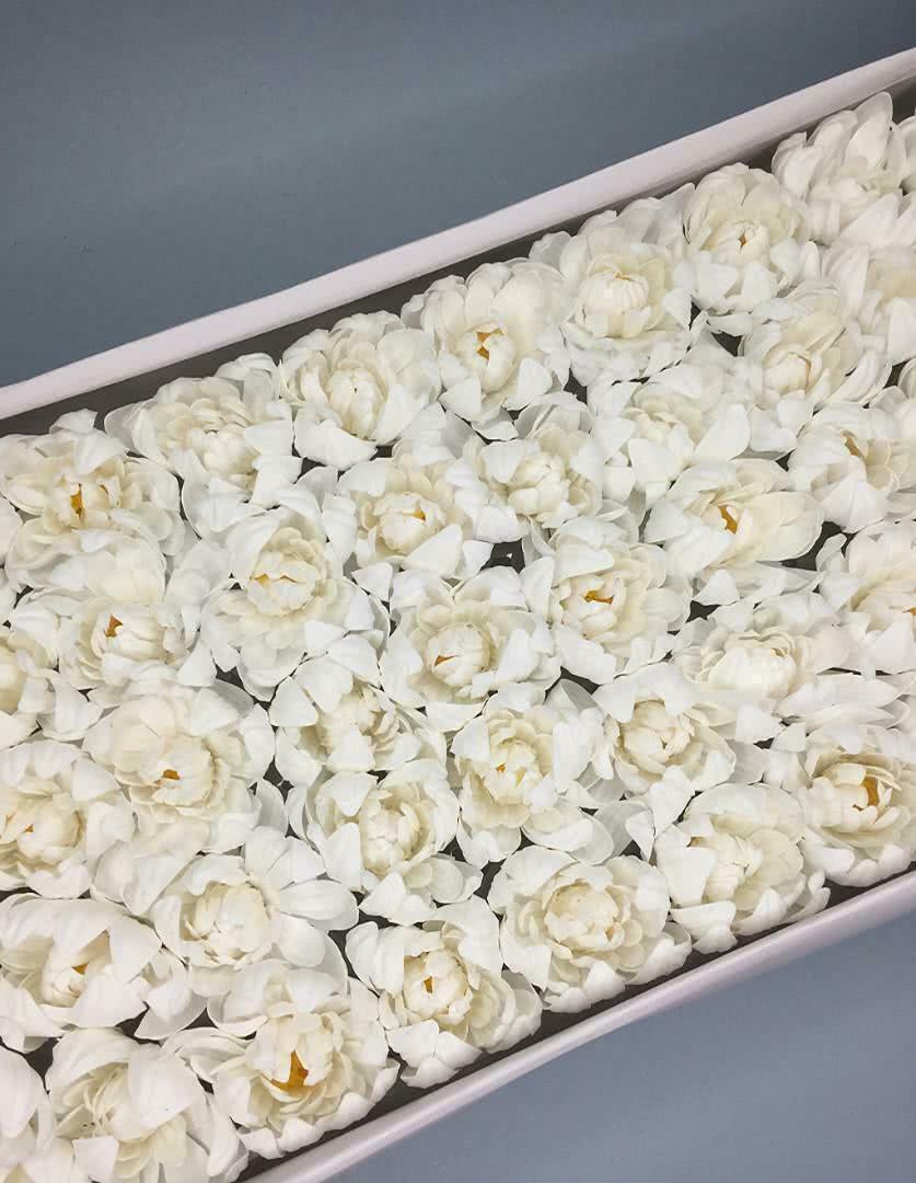 Хризантема — белая 50 шт